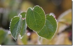 Dew-covered leaves