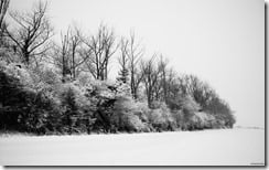 Snow scene, England, U.K (black and white)