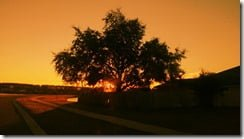 Lomogram_2012-12-21_04-17-12-PM