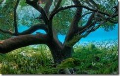 Mangrove seen from underwater, Aldabra, Seychelles