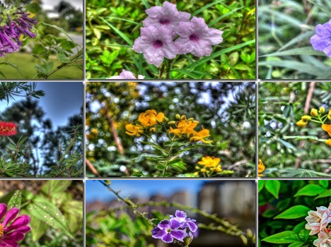 Theme – Flowers in HDR