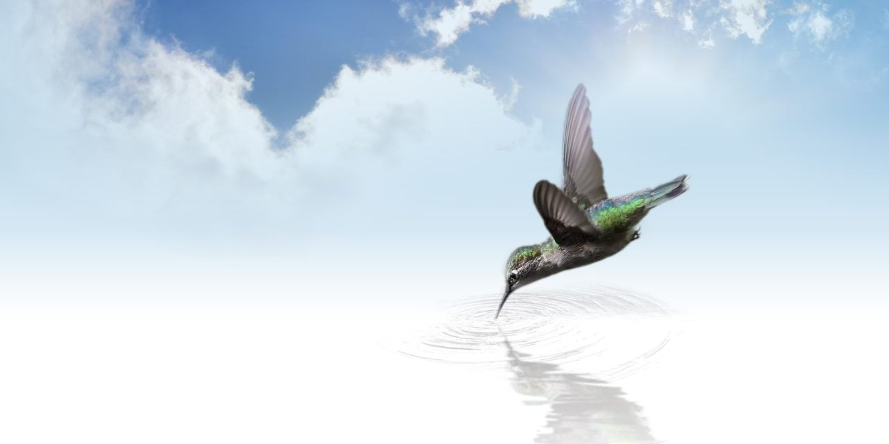 Microsoft Hummingbird App Uses AI to Curate Your News Feed